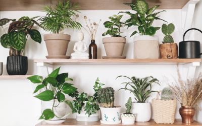 Gemütlich einrichten mit Pflanzen